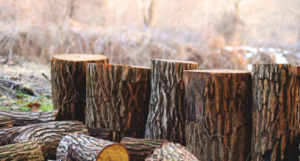 Common Logging Methods in Malaysia Misarma Enterprise - feature image