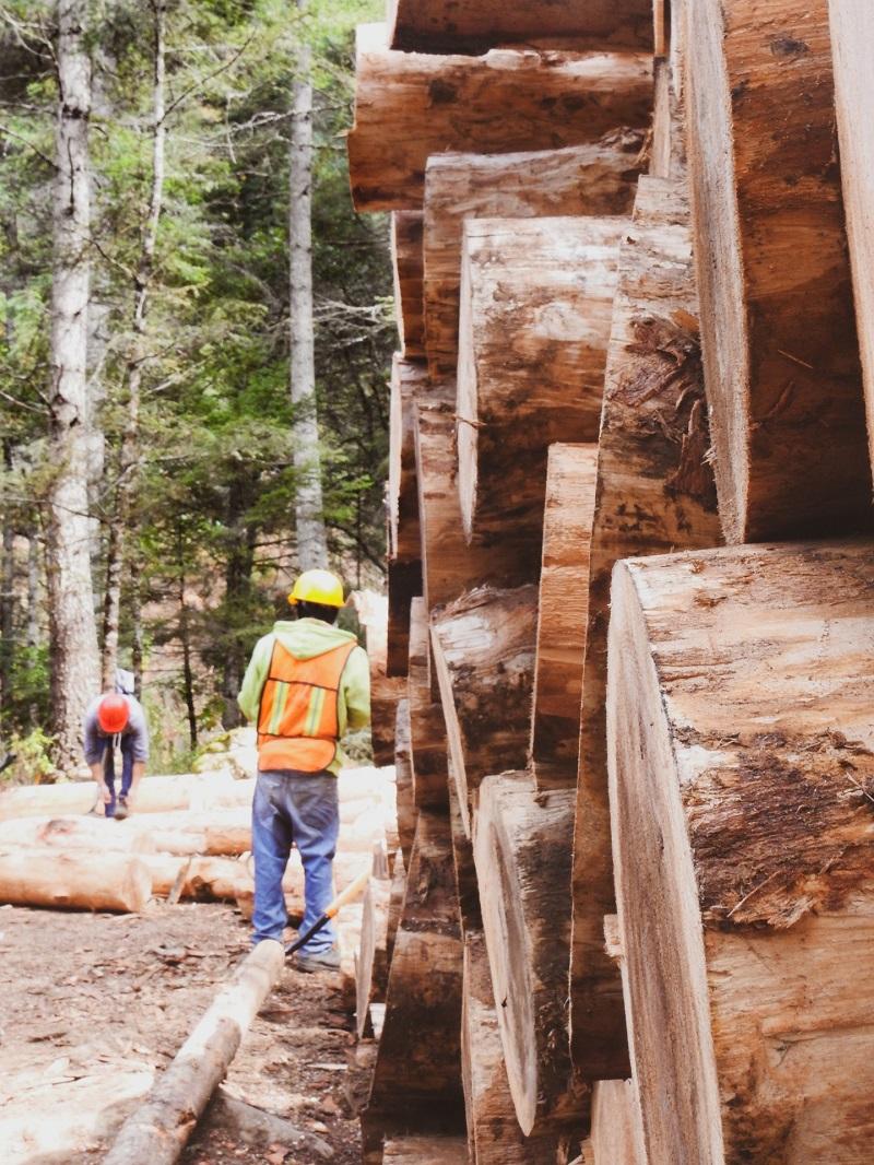 Logging machineries